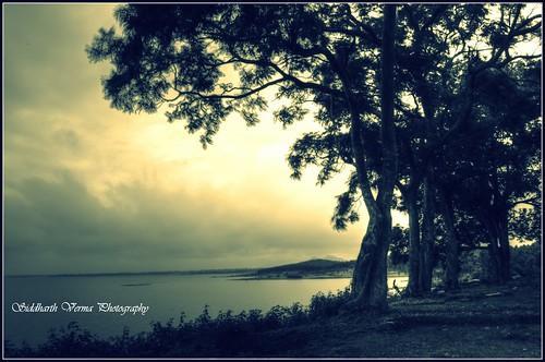 trees lake nature water beauty sunrise landscape photography nikon dream hills hdr picassa d5100