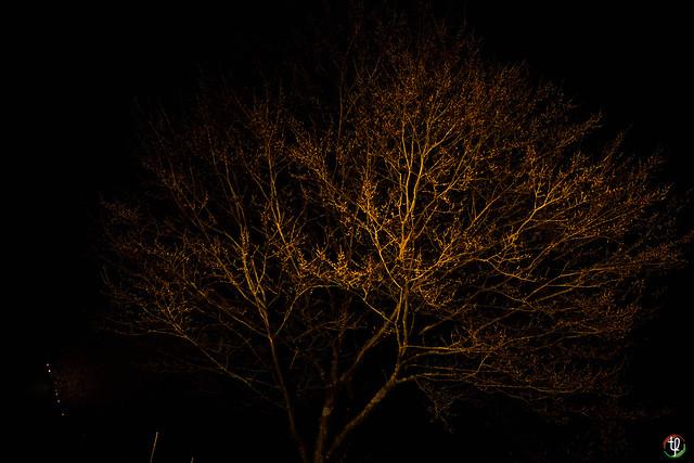 Baum im Flutlicht