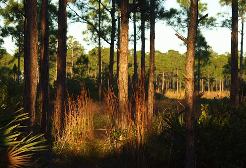 county sunlight beach forest florida palm sweetbaynaturalarea