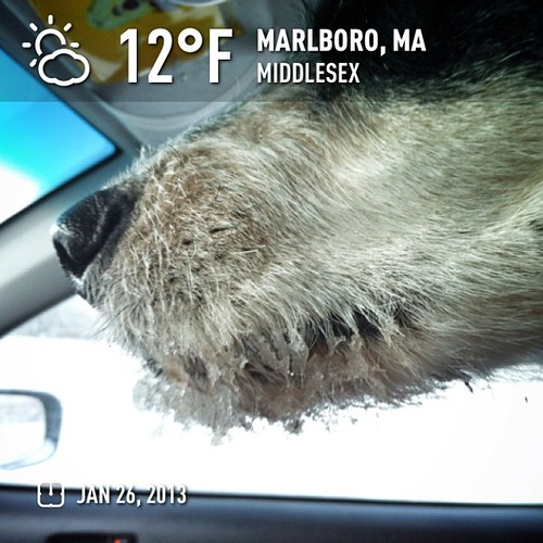 Frosty lippers weather for the morning @charitymiles walkies. Today we 3.2 miles walked for @Habitat_org #weather #instaweather #instaweatherpro  #sky #outdoors #nature  #instagood #photooftheday #instamood #picoftheday #instadaily #photo #instacool #inst