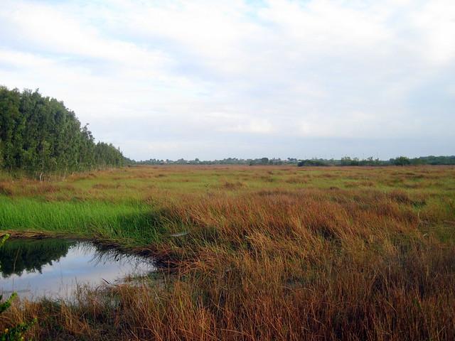 Pembroke Pines WCA 2-20130117