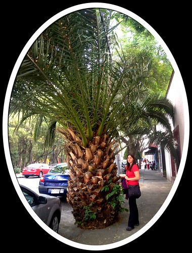 Weird photo of the day: the pine apple is bigger than Helene by tf_82