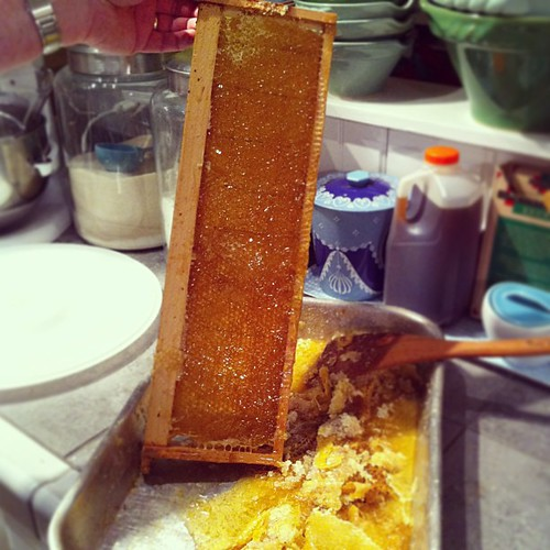 beautiful frame of honey : extracting #radicalhomemaking #imbolc #secularpagan