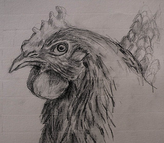 Drawing of a chicken