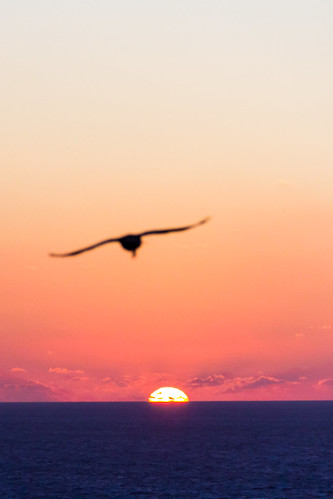 sea sky sun bird sol clouds sunrise canon contraluz dawn mar aves pájaros amanecer cielo nubes orangesky gaviotas backlighting chasing segull 60d persiguiendo