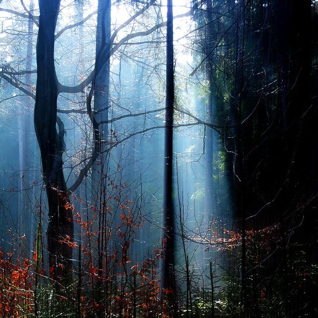 a forgotten misty forest photo