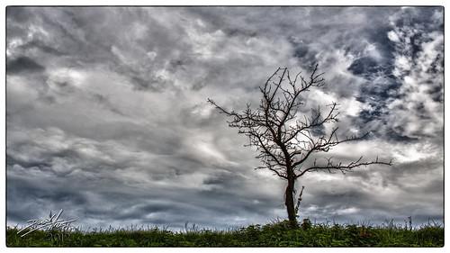 sky tree switzerland dramatic himmel che baum hdr 2012 nebo steinach stablo dalmatino kantonstgallen