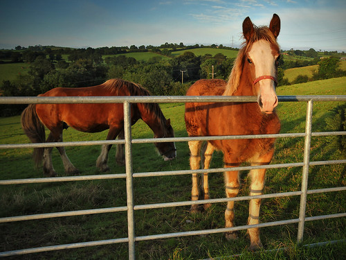 morning light horse field canon gate mare view farm northernireland farmer agriculture equine ulster foal countyarmagh tullyallen 60d