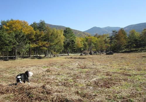 澁・辰野館のプライベートゲレンデにて 2012年10月16日10:09 by Poran111