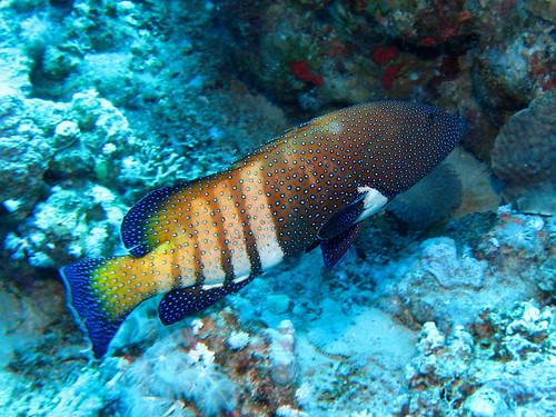 Vieille la prude de Plongez-Pépère, sur Flickr