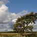 Norden Tree