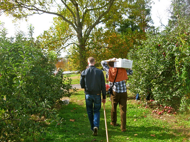 Apple Picking boys