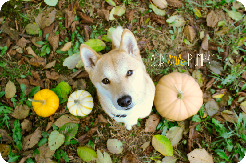 our {little} pumpkin 2012 | green