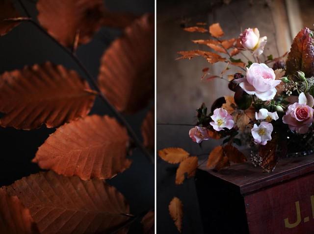 roses_autumn3