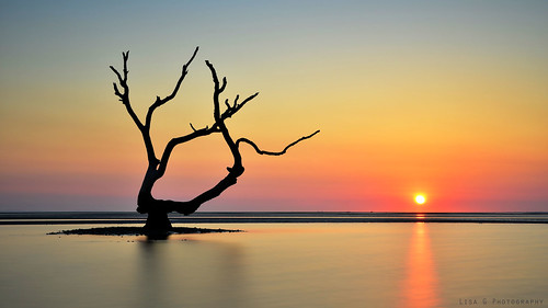 trees tree australia nudgeebeach