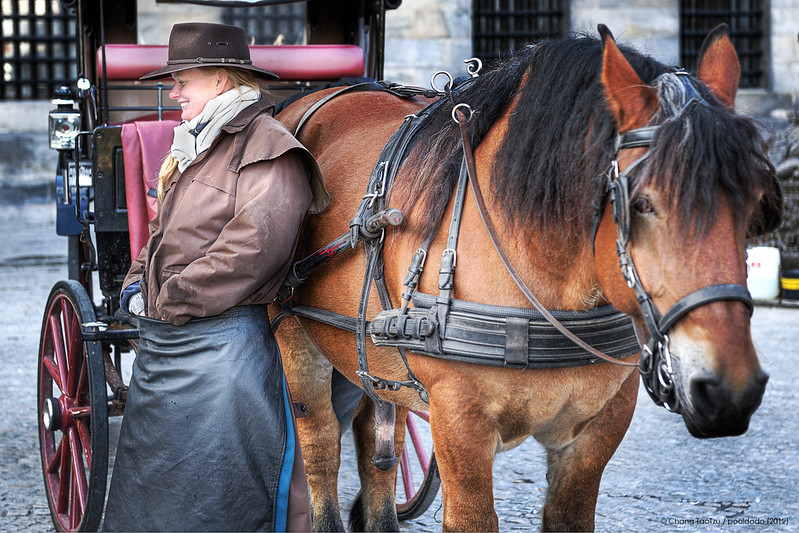 [street] Horse-drawn vehicle