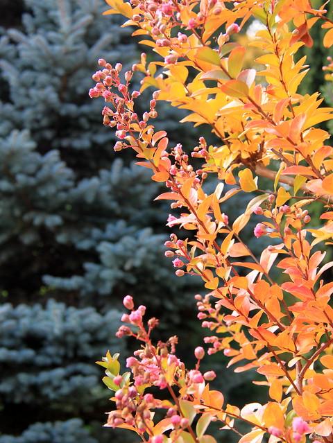 Colori autunnali nel giardino botanico di Lovanio