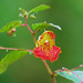 Wild Orange Balsam in the morning light. by ajay's visual~panorama©