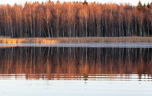 wood autumn sunset lake reflection tree fall forest espoo finland landscape europe shoreline eu 100mm autumncolors scandinavia puu metsä syksy järvi auringonlasku uusimaa ruska pitkäjärvi laaksolahti metsänreuna borderofaforest järvenperä kolkekangas ranraviiva vedenraja