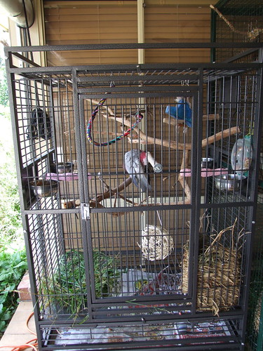 My galah Morgy's cage