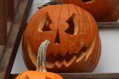 pumpkin 052