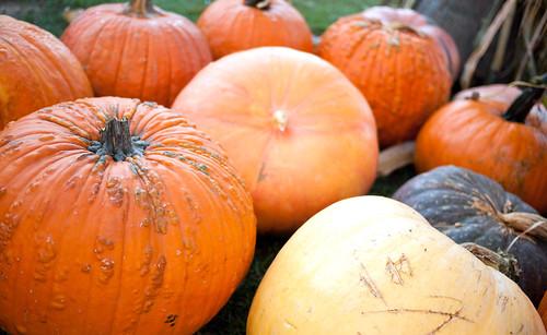 pumpkin08