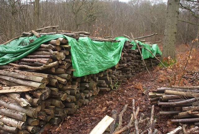 DSC_5480 log pile