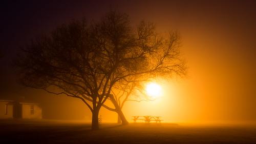 morning trees fog landscape moody atmosphere eerie