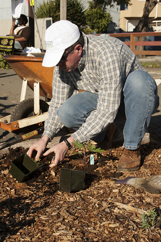 Alex Friend, station director of the U.S. Forest Service's Pacific Southwest Research Station, readies plants for the Richmond Edible Forest. The station's involvement is part of a larger effort by Urban Tilth to connect with residents, particularly children, to help them learn more about their local environment. (U.S. Forest Service photo)