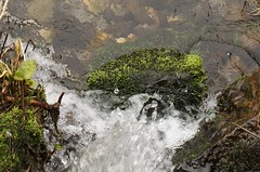Water on Moss