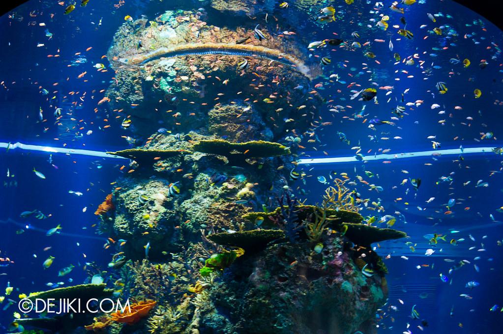 S.E.A. Aquarium - Coral Garden