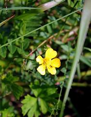 perlan flora2
