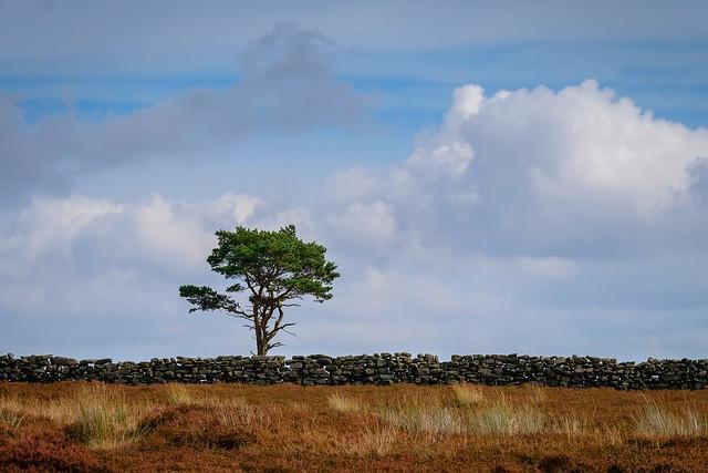 Lone Tree at Hancow