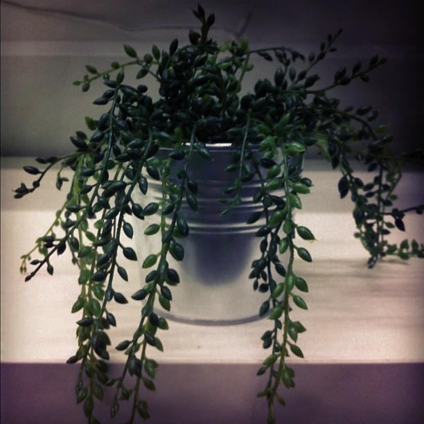 """Vaso para o @jorgewho com a planta """"opção 3""""."""