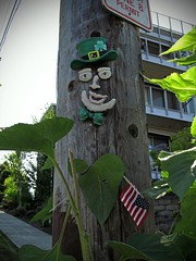IRISH AMERICAN TREE