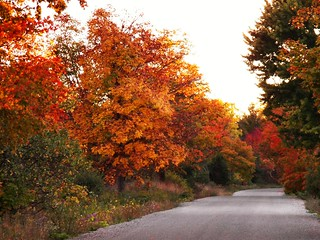 Country-Road-Fall