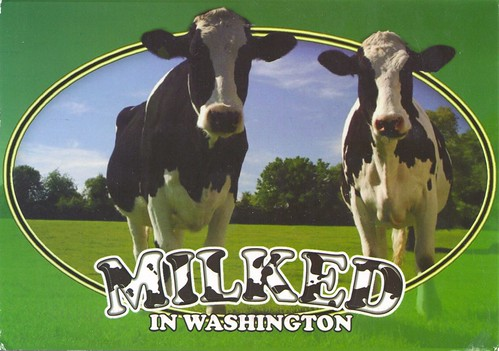 Cows Milked in Washington