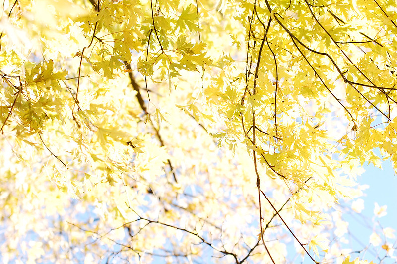 yellow fall