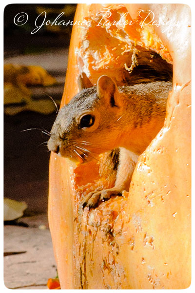 Little-Squirrel-&-Pumpkin-7