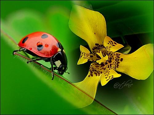 5ª Flor para você \ For you !!!!