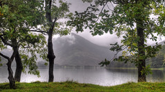 Buttermere; through the trees