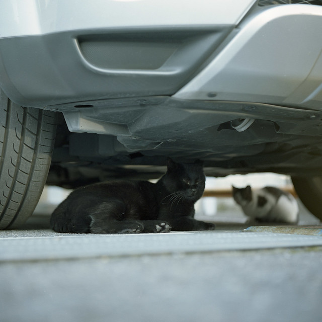 車輪横のネコ