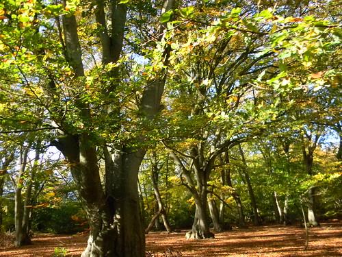 Trees near Egypt Wood