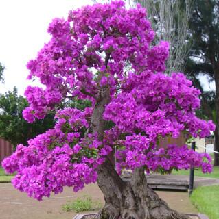 First bonsai help! 8133890315_103f232672