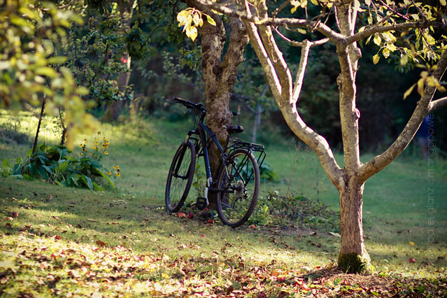 bicycle in the orchard