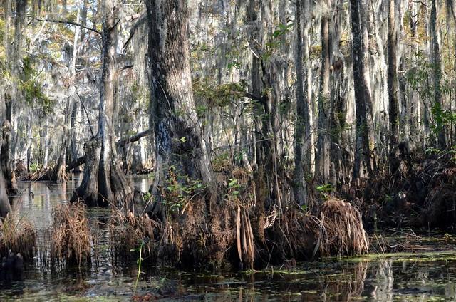 Honey Island Swamp Band Reviews