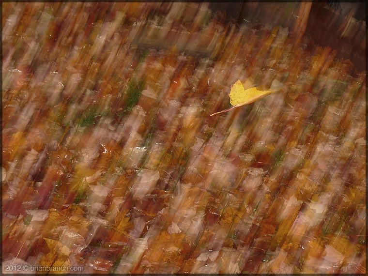 P1280954_falling_leaf