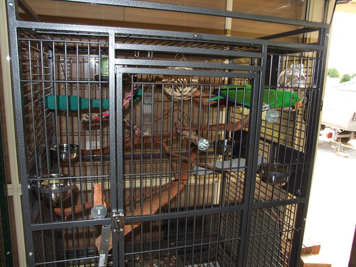 Pepi full cage