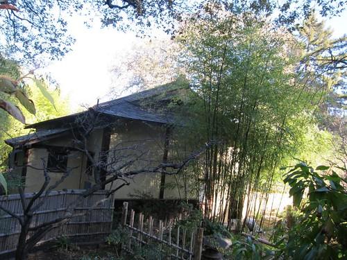 Hakone Japanese Gardens, Saratoga, CA IMG_2355