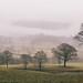 Lake District Fog by Dan Rubin